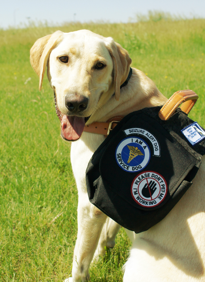 How To Train A Dog As A Service Dog