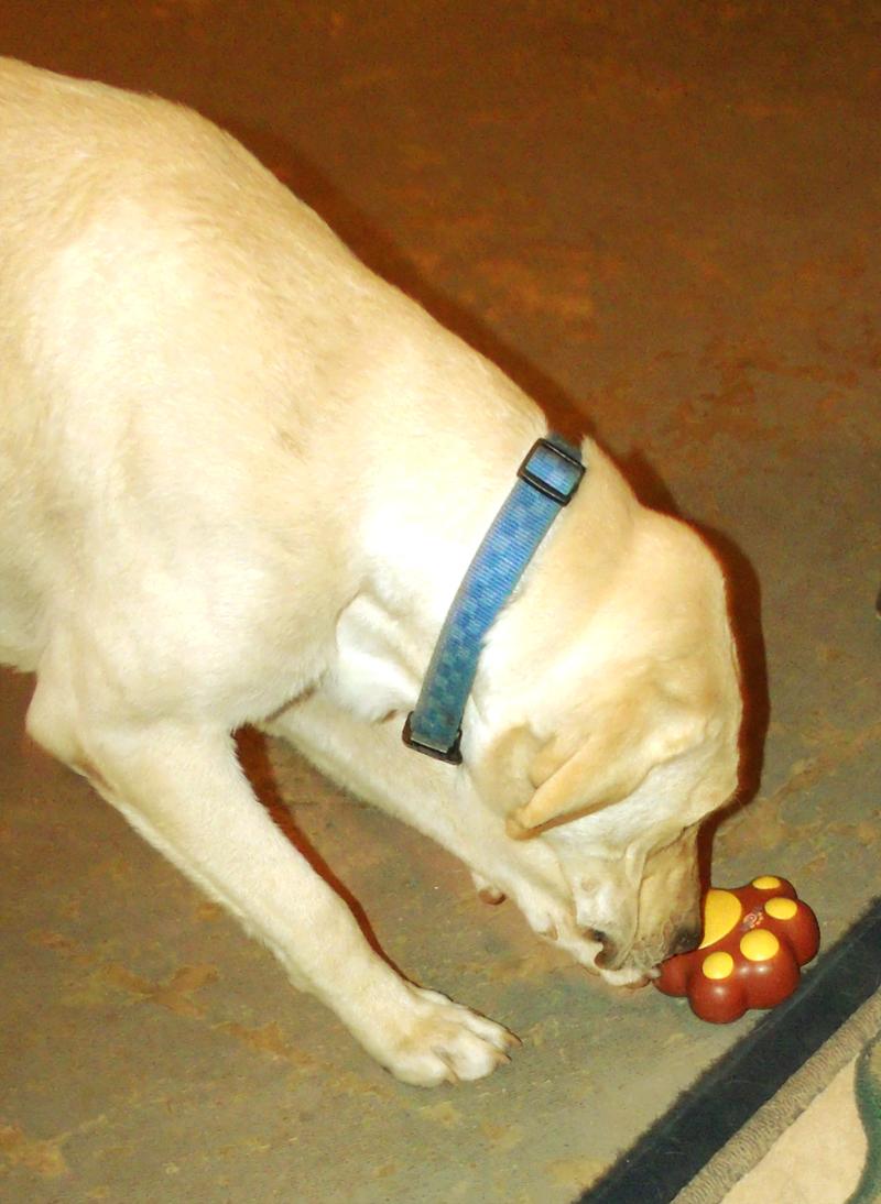 Service Dogs For Seizure Patients